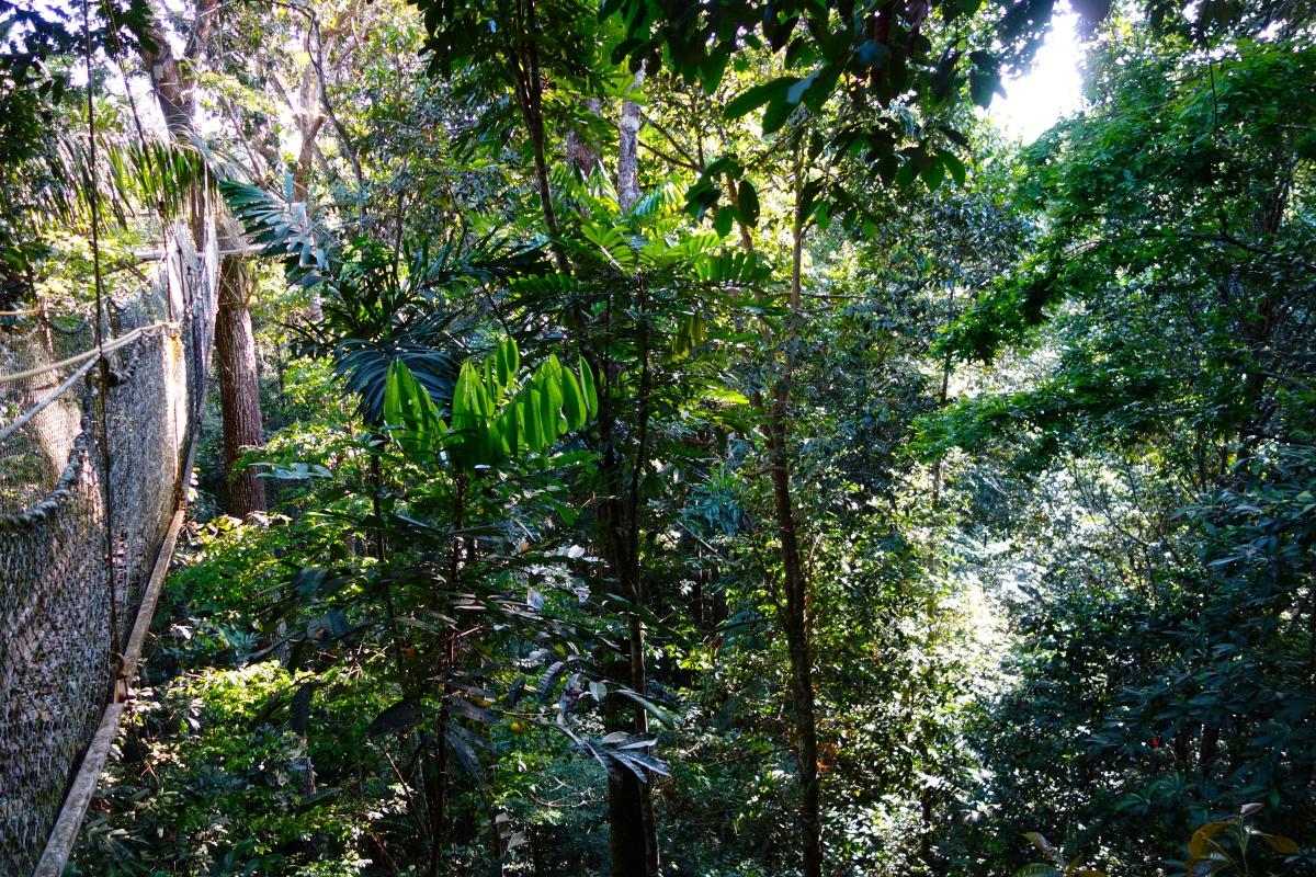Canopy Walk, Iwokrama Reserve, Guyana -- Karina Noriega