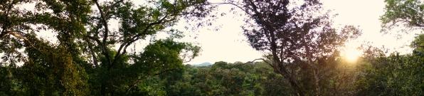 View over Canopy, Iwokrama Reserve, Guyana -- Karina Noriega