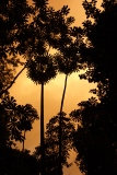 Jungle Sunset, Guyana -- Karina Noriega