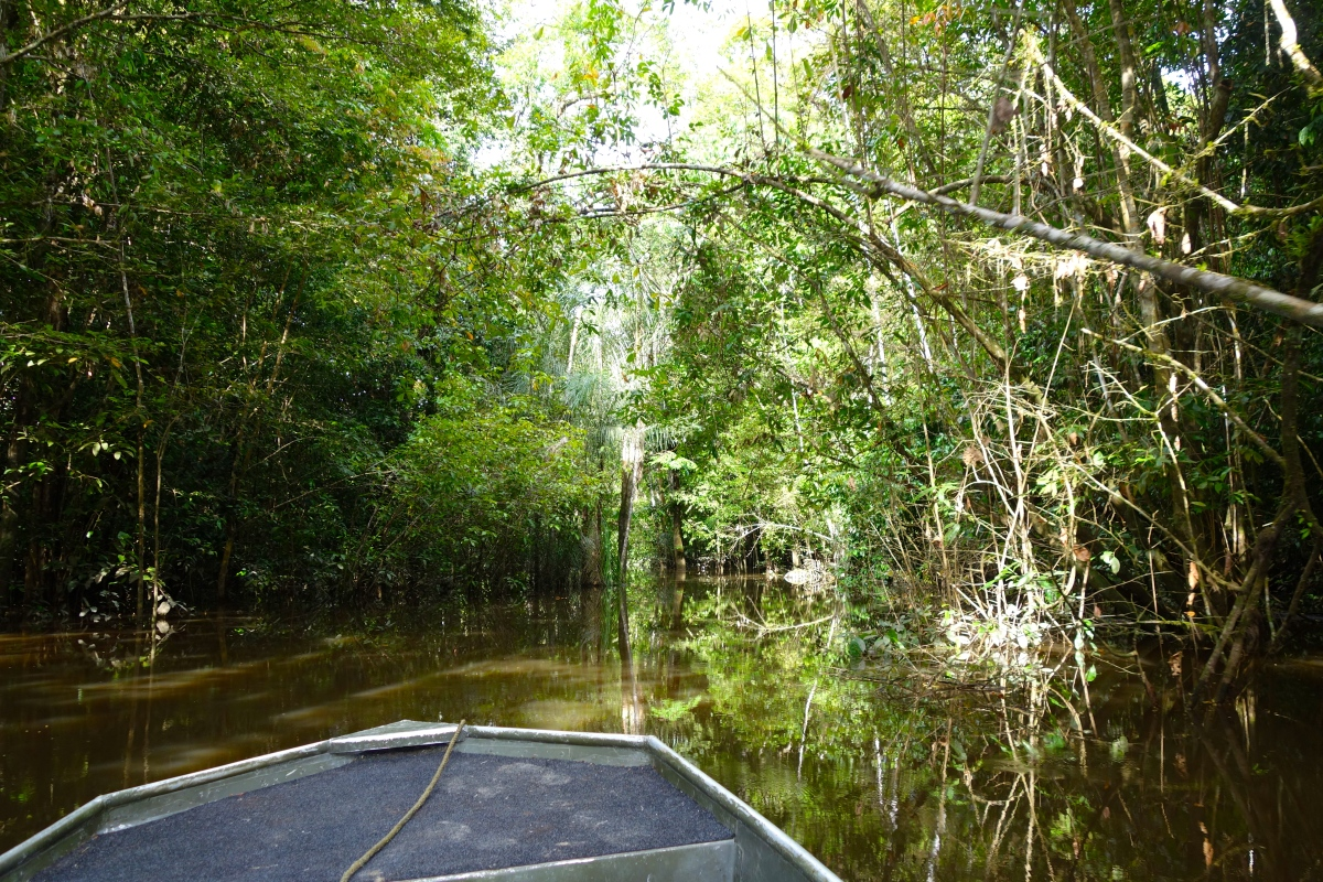 Jungle boat ride, Guyana -- Karina Noriega