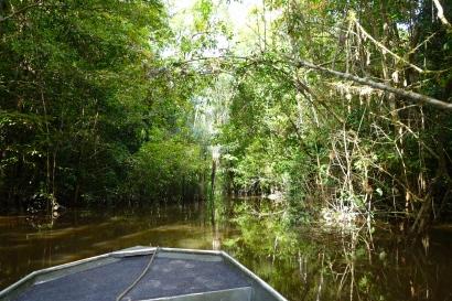 Jungle boat ride, Guyana -- Karina Noriega
