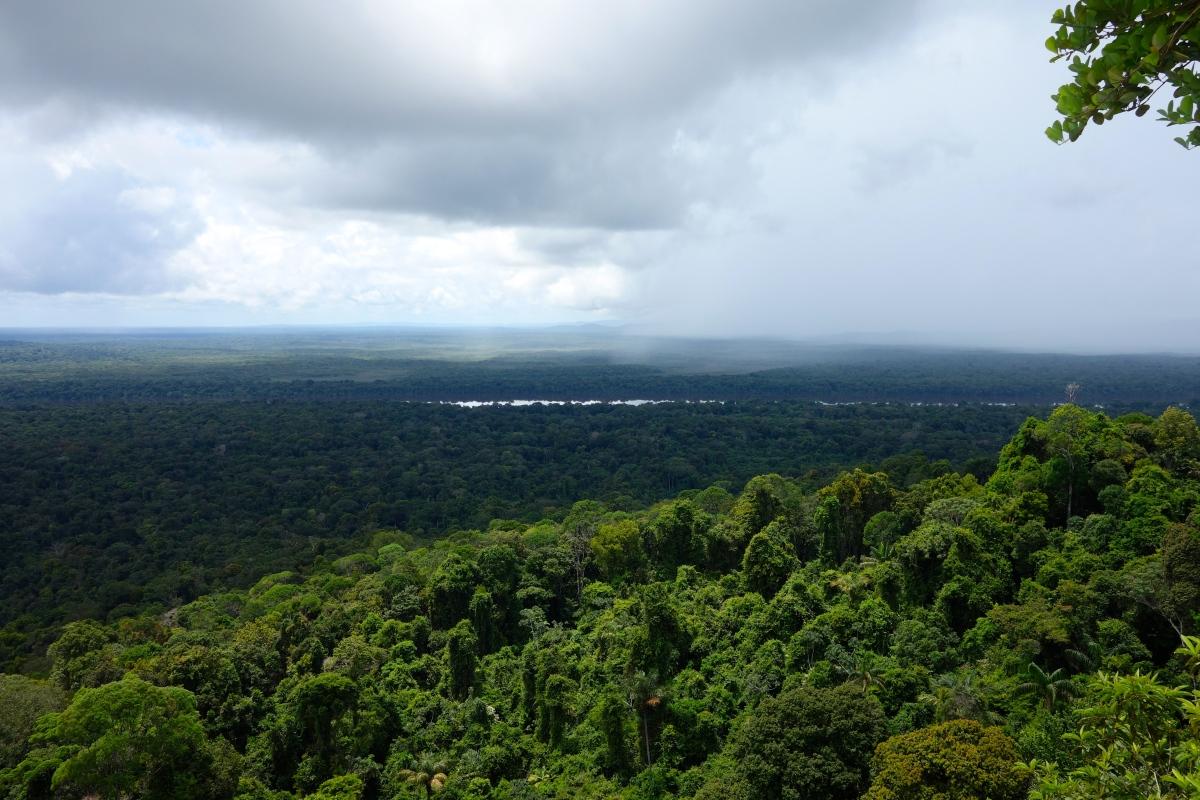 View from Turtle Mountain, Guyana -- Karina Noriega