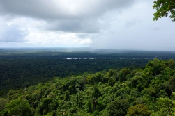 View from Turtle Mountain, Guyana -- Karina Noriega