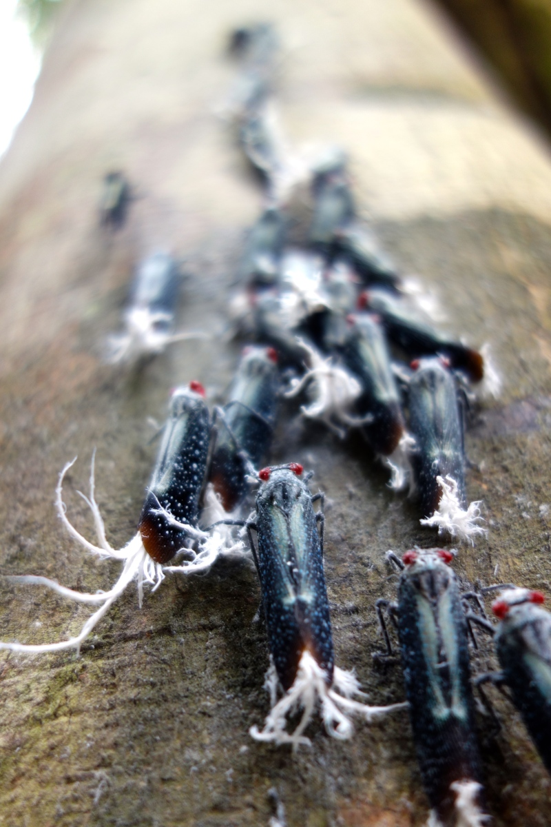 Creepy Crawlies, Guyana -- Karina Noriega