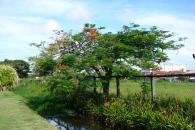 In Bloom, Georgetown, Guyana -- Karina Noriega