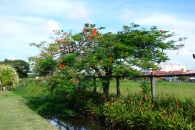 In Bloom, Georgetown, Guyana -- Karina Noriega