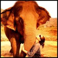 ElephantyLove.Thailand.KarinaNoriega
