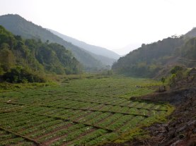 Watermelons grow near the border with China and Laos - Karina Noriega