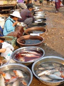 No electricity, no refrigeration - hard to get fresh fish at the market, Somewhere in Laos - Karina Noreiga