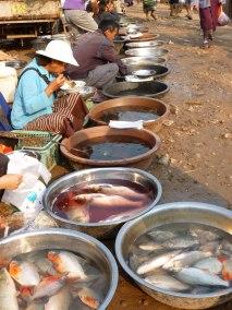 No electricity, no refrigeration - hard to get fresh fish at the market, Somewhere in Laos - Karina Noreiga
