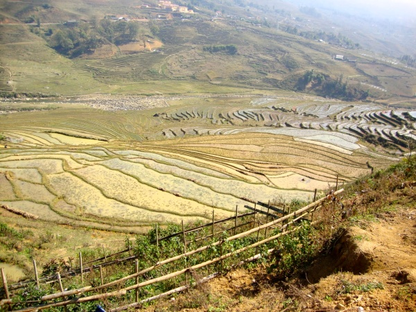 Rice Terrace, Northern Vietnam -- Karina Noriega