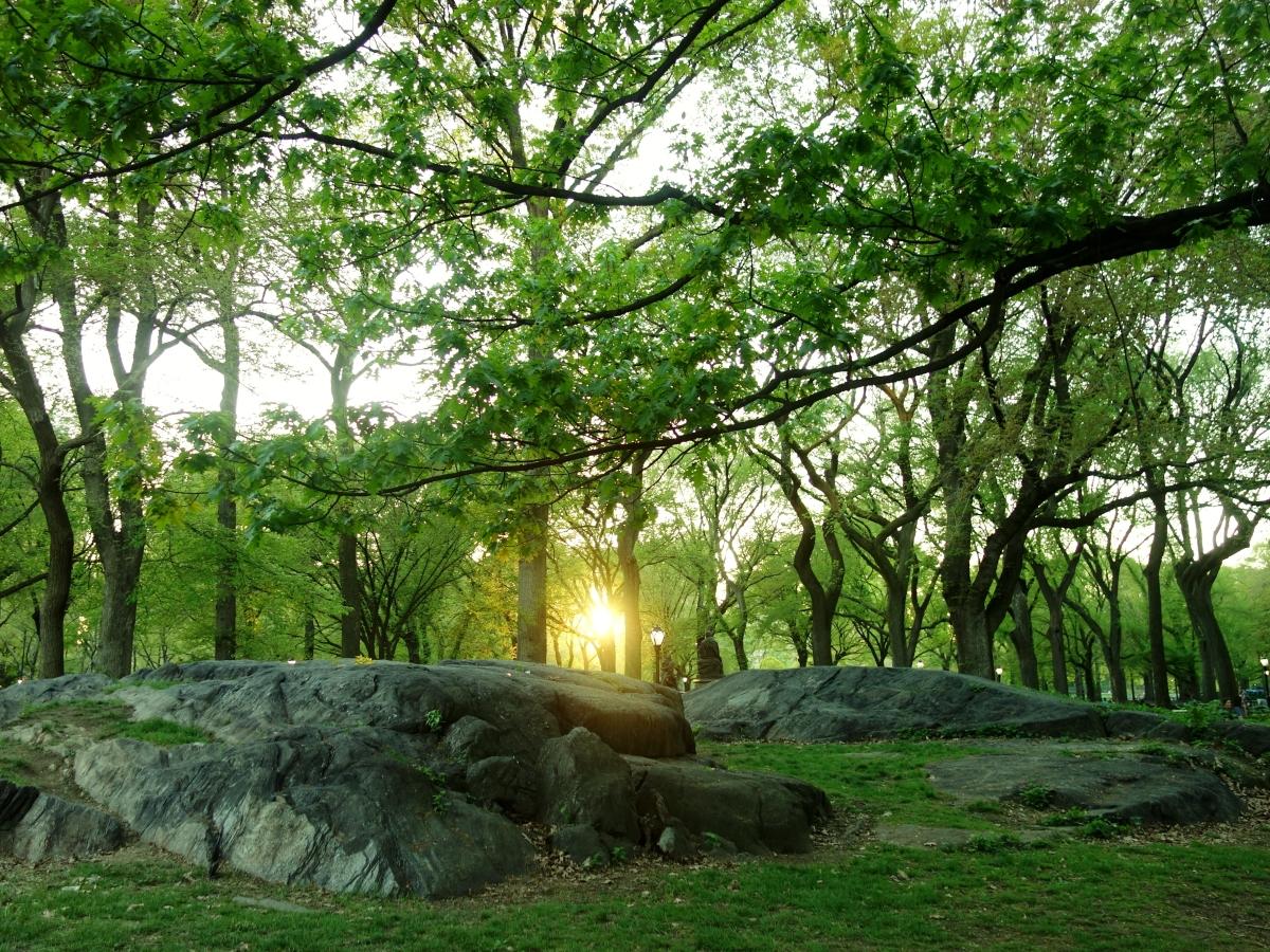 Central Park Sunsets, Manhattan, NY, USA - Karina Noriega