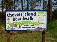Chesser Island Boardwalk - Okefenokee Wildlife Refuge - Karina Noriega