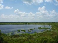 Lake view from the Observatory - Okefenokee Wildlife Refuge - Karina Noriega