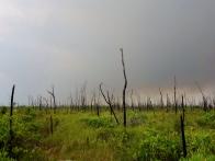 Storm moves in - Okefenokee Wildlife Refuge - Karina Noriega