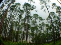 Okefenokee Wildlife Refuge - Karina Noriega