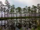 Mirrored Lake - Okefenokee Wildlife Refuge - Karina Noriega