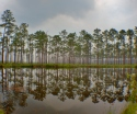 Mirrored Lake - Okefenokee Wildlife Refuge - Karina Noriega