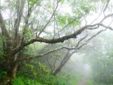 Craggy Gardens - Blue Ridge Parkway, North Carolina, USA - Karina Noriega