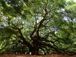 Angel Oak, St. John's, Charleston, South Carolina, USA - Karina Noriega