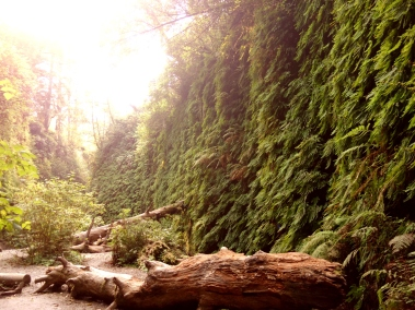Fern Canyon, Redwood State Park, California, USA - Karina Noriega