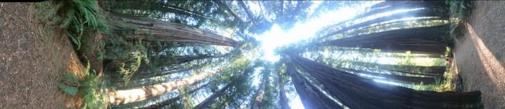 Avenue of the Giants, Redwoods National Park, California, USA - Karina Noriega