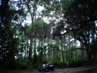 Through the moss covered ancient oaks of South Carolina