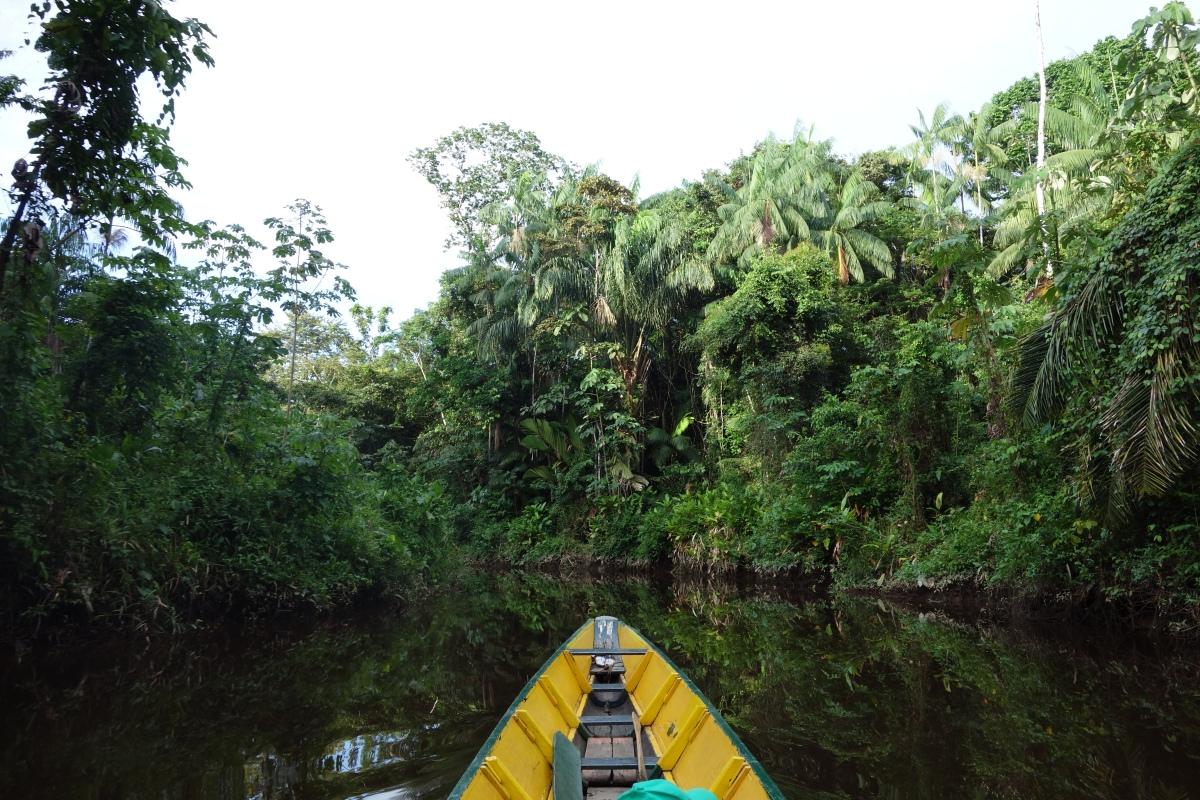 Headed into the wild amazon and a plethora of wild encounters to come - Santigron, Suriname -- Karina Noriega