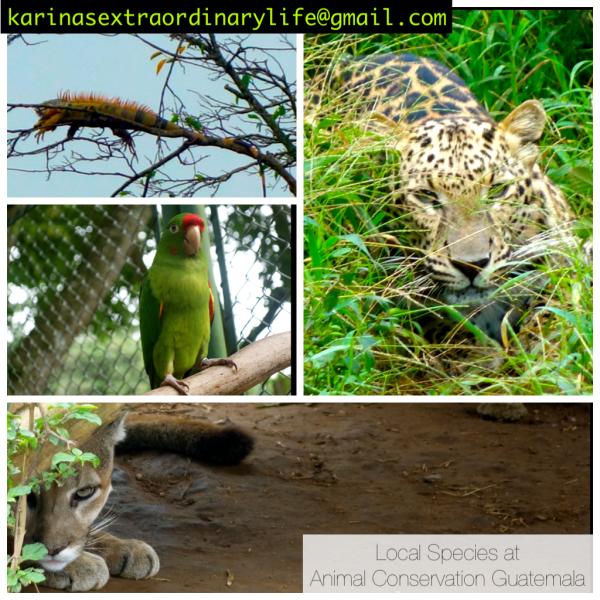 Local Species of Guatemala -- Karina Noriega