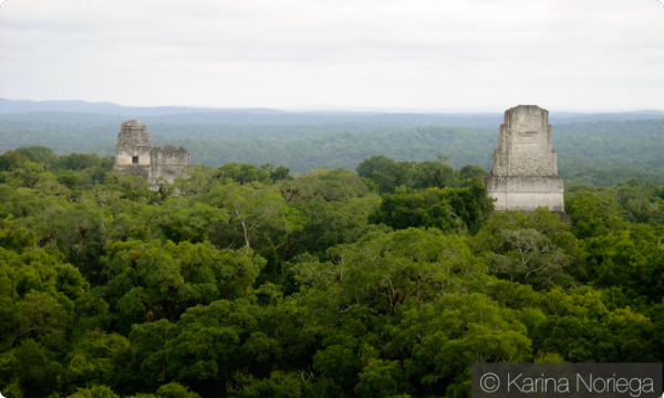 Temples of Tikal Tower above the jungle canopy -- Guatemala -- Karina Noriega