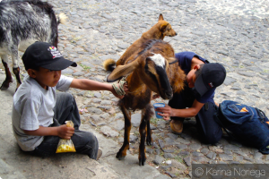 Children get fresh goats milk downtown Antigua, Guatemala -- Karina Noriega