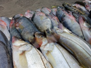 Display of the mornings catch by local fisherman at the fish market in Fronteras, Rio Dulce, Guatemala -- Karina Noriega