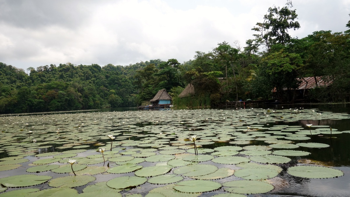 One of my absolute favourite spots. The water lily village near Aguas Calientes, Rio Dulce, Guatemala -- Karina Noriega