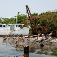 Pelicans chill in large groups near fishing vessel. Livingston, Guatemala -- Karina Noriega