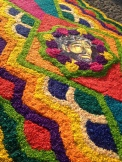 Flowered carpets known as alfombras adorn the streets of Antigua during one of the worlds most impressive religious festivals, Semana Santa. Antigua, Guatemala --April Beresford