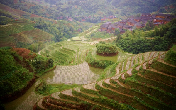The high altitude terraces of the Longji area provide glimpses of these phenomenon of human engineering between the misty clouds of the rainy season. Dazhai, Guanxi, China – Karina Noriega